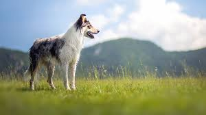 Wall Border Paper Border Collie Wallpapers Android Apps On Google Play 3d