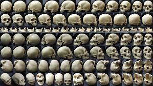 skulls explore skulls on deviantart