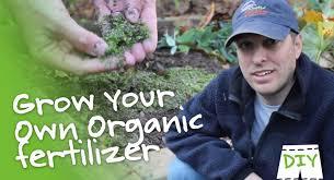 the best organic fertilizers to improve your vegetable garden