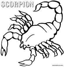 scorpions coloring pages coloring home