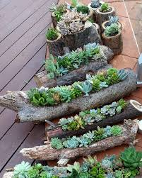 Rock Garden Succulents 70 Indoor And Outdoor Succulent Garden Ideas Shelterness