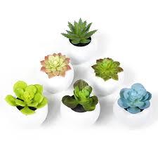 epctek pack of 6 mini different succulents artificial plants with
