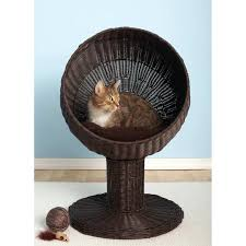 Petco Cat Beds 100 Cat Beds Petco Here U0027s How To Know When To Toss