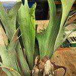 Ra Materials Comfort Tx Ra Nursery Materials Landscape Llc