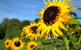 best of the 2011 test garden flowers rodale u0027s organic life