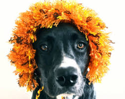 Dog Halloween Costume Lion Mane Lion Costume Etsy