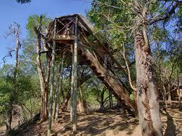 lodge treehouse safari 6 days choose your perfect safari experience