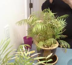 please idenitify this plant and is it poisonous to cats