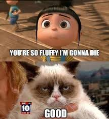 Memes Of Grumpy Cat - grumpy cat pics of cats dogs and other furry things
