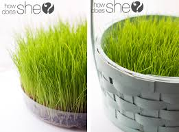 easter basket grass grow your own easter basket grass easter baskets potting soil