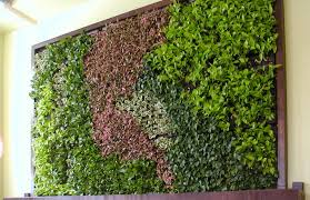 living wall vs green wall eco brooklyn