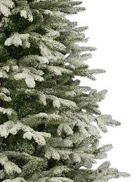 frosted fraser fir tree balsam hill australia