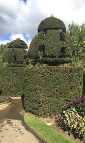 Topiary Cloud Trees - 8 best topiary images on pinterest topiaries uk plant and columns