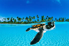 why life is so tough for sea turtles