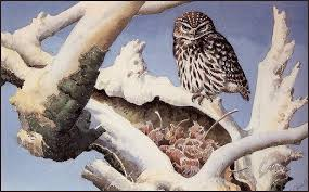 owl on a snowy tree trunk charles tunnicliffe wikiart org