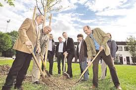 landschaftsbau m nchen ein baum zum jubiläum garten und landschaftsbau münchen