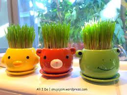 wheatgrass as home decor all i do