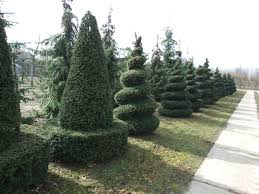Pre Lit Topiary Home Decoration Inspirative Artificial Spiral Topiary Form