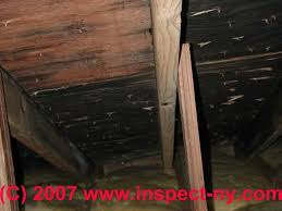 attic mold mold in attics a u0027how to u0027 photo and text primer on