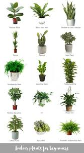 small potted plants inspiration best office plants for inspiring unique interior potted