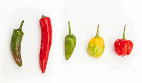 how chili peppers work stuff you should