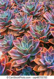 beautiful plants beautiful succulent plants echeveria succulents arranged on