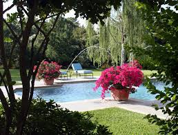 bougainvillea pool mediterranean with chaise lounge fade resistant