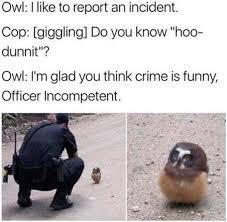 Owl Memes - the best owl memes memedroid