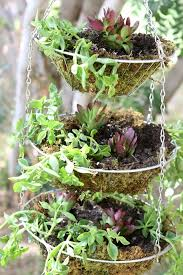 Hanging Succulent Planter by 338 Best Little Garden Ideas Images On Pinterest Gardening