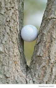 golf in a tree stock picture i1234357 at featurepics