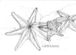 coloring pages gorgeous drawing of a starfish howtodraw 06
