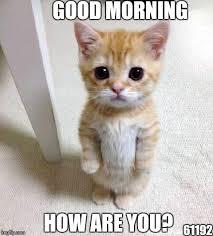 Good Cat Meme - cute cat meme imgflip
