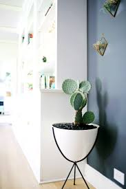 White Wall Planter by Love This White Bullet Planter With A Cactus Against A Charcoal