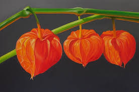 lantern flower lantern painting by pera schillings