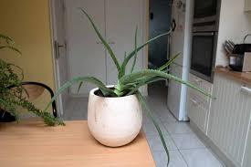 best house plants 10 must grow house plants 2017