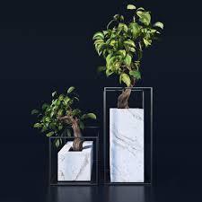 3d model bonsai trees cgtrader