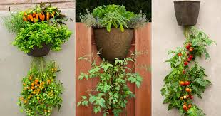 don u0027t have space for a garden here u0027s how to grow vegetables and