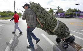 Waste Management Christmas Tree Pickup by No Pick Up For Christmas Trees In Miami Dade Without Fee Hike