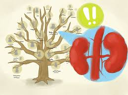 kidney infection improve kidney function blood volume and blood pressure