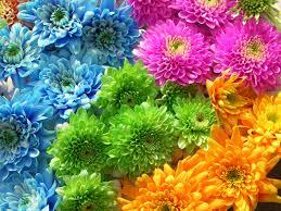 mums flower flower mums flowers word lotus flower desktop backgrounds hd 16 9