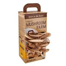 Mushroom Home Decor Back To The Roots Mushroom Farm Kit Mushkit1 The Home Depot