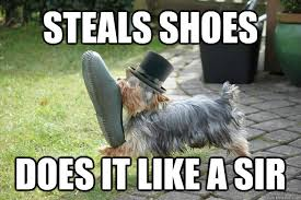Shoes Meme - steals shoes does it like a sir classy dog quickmeme