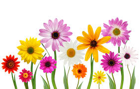 image of spring flowers free stock photo spring flowers the shutterstock blog