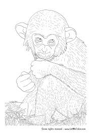animals u2013 letmecolor