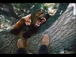 attack on tree many more animal attack 2017 best