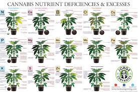 fertilize your cannabis plants for maximum buds u2013 zenpype