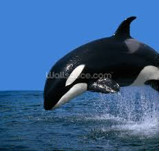 stunning orca wallpaper wall mural wallsauce save your design for later