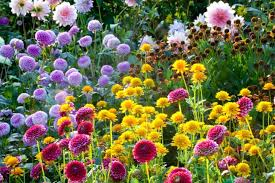 Summer Garden Plants - 15 beautiful summer inspired garden ideas housely