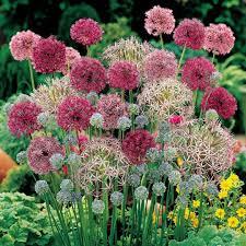 best diy cottage garden ideas from pinterest 1 onechitecture