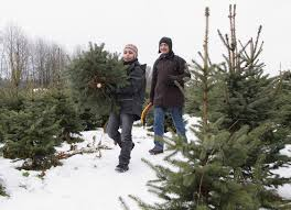 where to cut down a christmas tree in oneida county new york